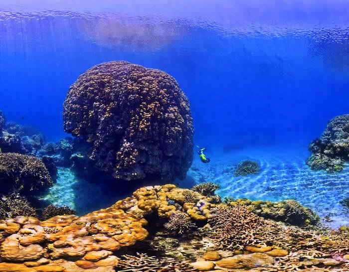 Ancient Coral colony in the New Caledonia Lagoon