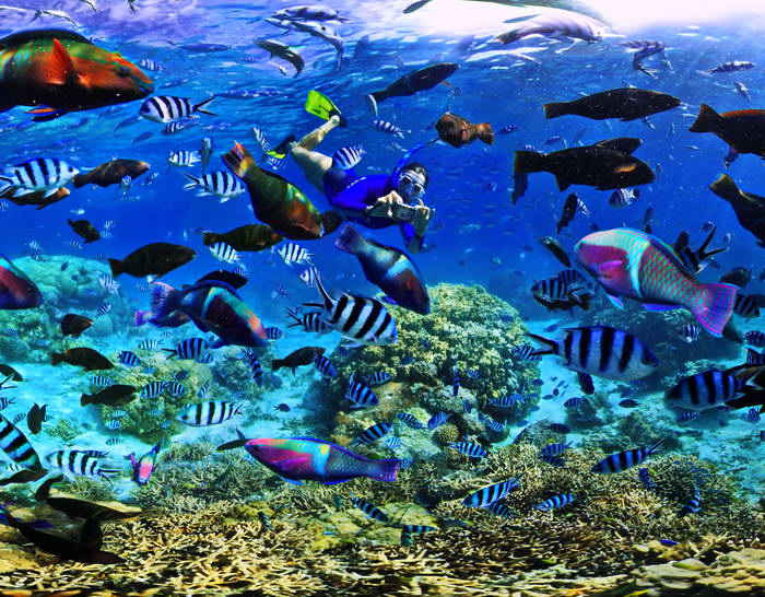 Coral Reef Fish in a New Caledonia Marine Reserve